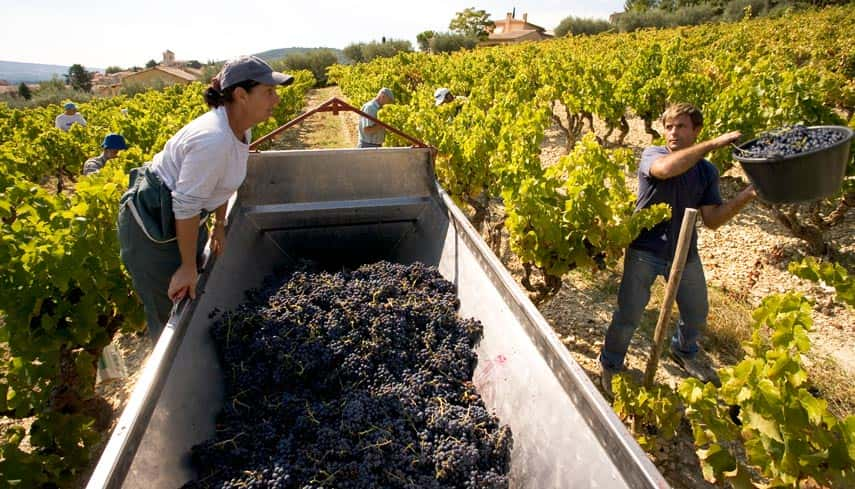 There has never been a better time to buy Rhône