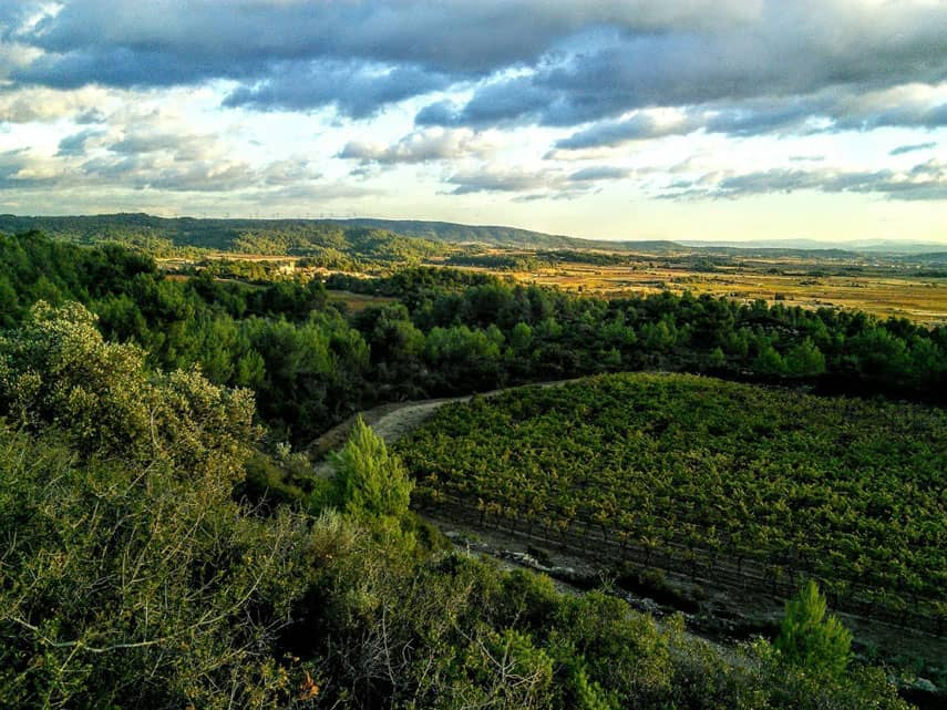 The view towards Pic St Loup from Cevennes foothills