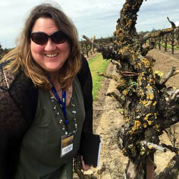 I'm smiling as it has finally stopped raining! Lodi is home to some almost statuesque old vines