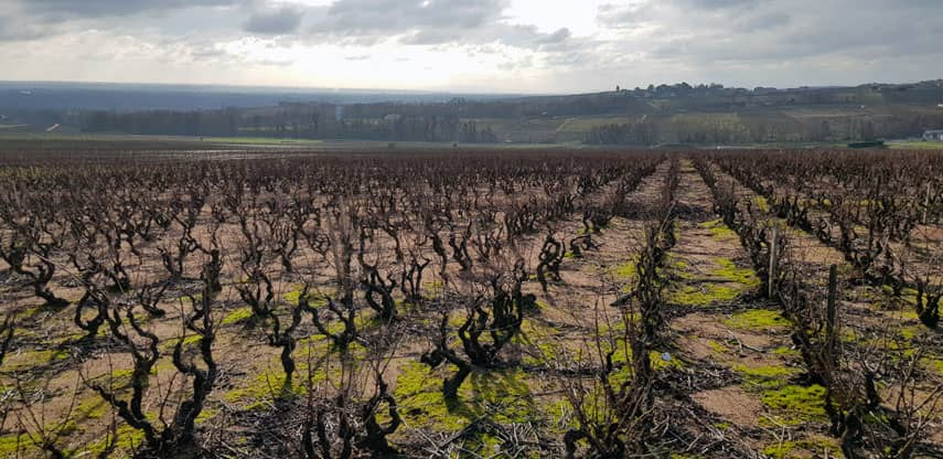 Shining a light on the classic Beaujolais style