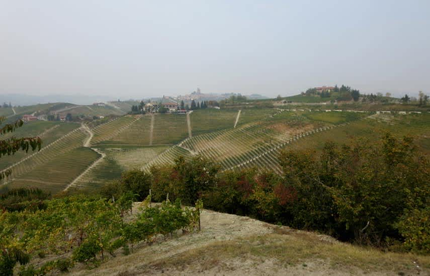 Steep vineyards in Serralunga
