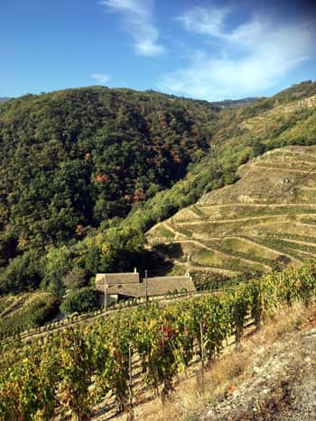 Thirsty slopes in the northern Rhône in 2017
