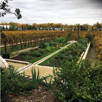 Farming methods are going to be talked about in reference to the abnormal conditions of 2018. There will be winners and losers on all sides. The Chaves made use of biodynamic preparations, grown here in their herb garden to help battle mother nature