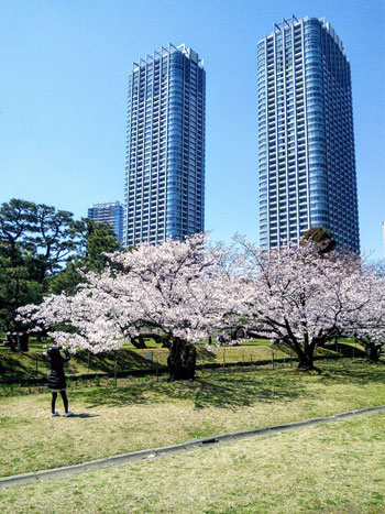 Blossom in the park - Japan