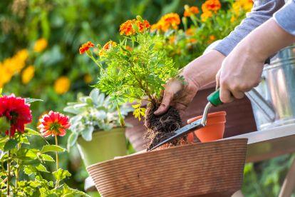 Cheshire Garden Solutions LTD