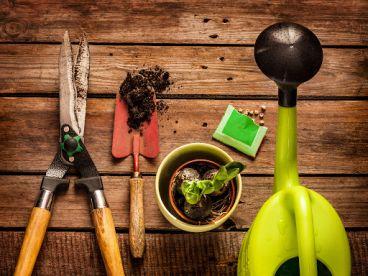 Ladybug Garden & Landscaping Services