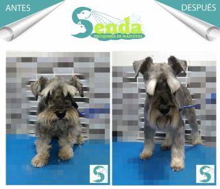 Peluquería Canina & Felina SENDA (A Domicilio)