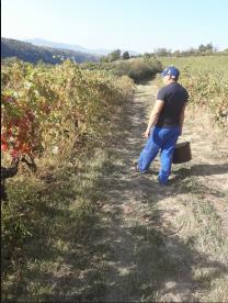 Prestation de service agricole - Annonay