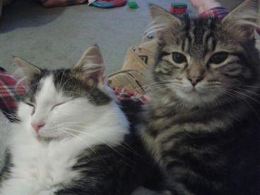 Little Critters Pet Sitters
