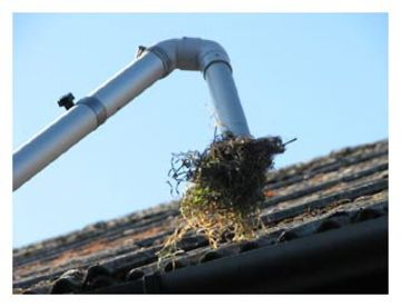 Ace Gutter & carpet Cleaning