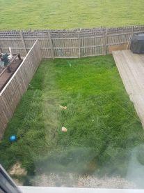 Darryl's Grass Cutting Service