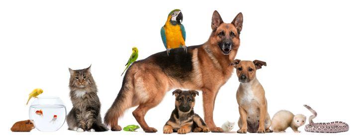Adored Animals Hospitality