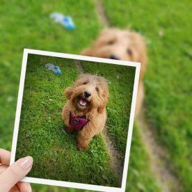 Animal Assist Pet Care Services