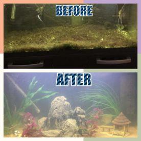 Algae It A Clean