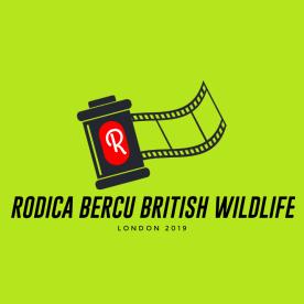 British Wildlife Photographer