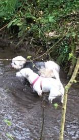Danescourt & Radyr Pet Care