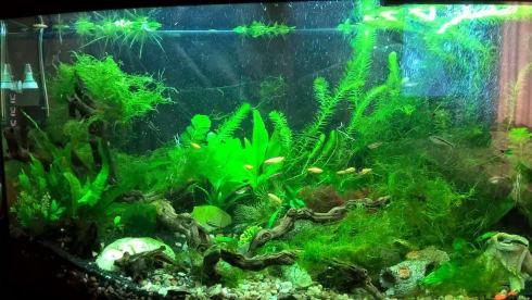 Darkwater Aquatics LTD