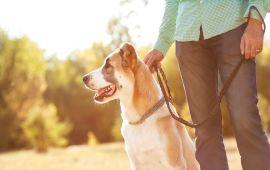 How to create a Dog Walker website