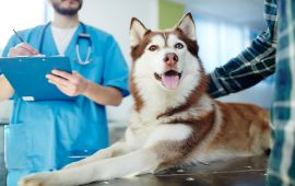 What is the best layout for a pet care website?