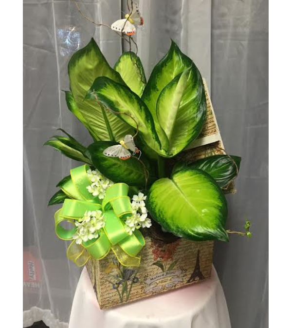 Ellington's Green Plant Memory Box
