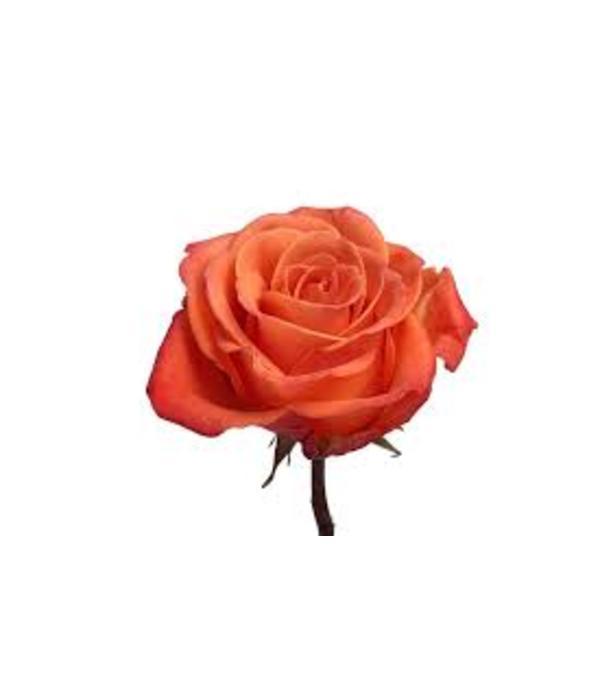 1 Dozen Orange Crush Long Stemmed Roses