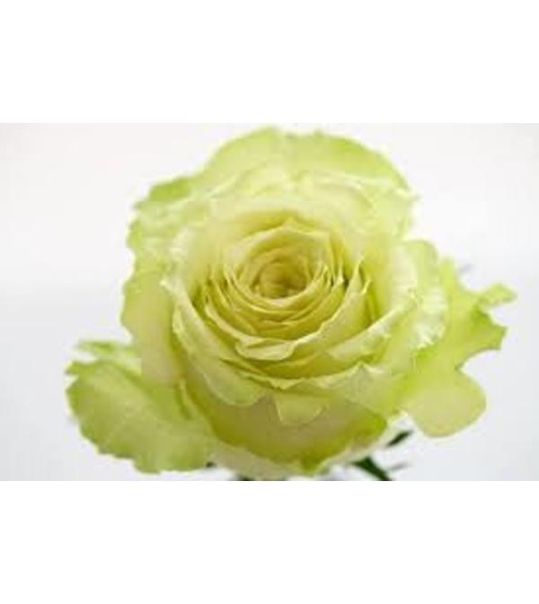 1 Dozen Green Lemonade Roses