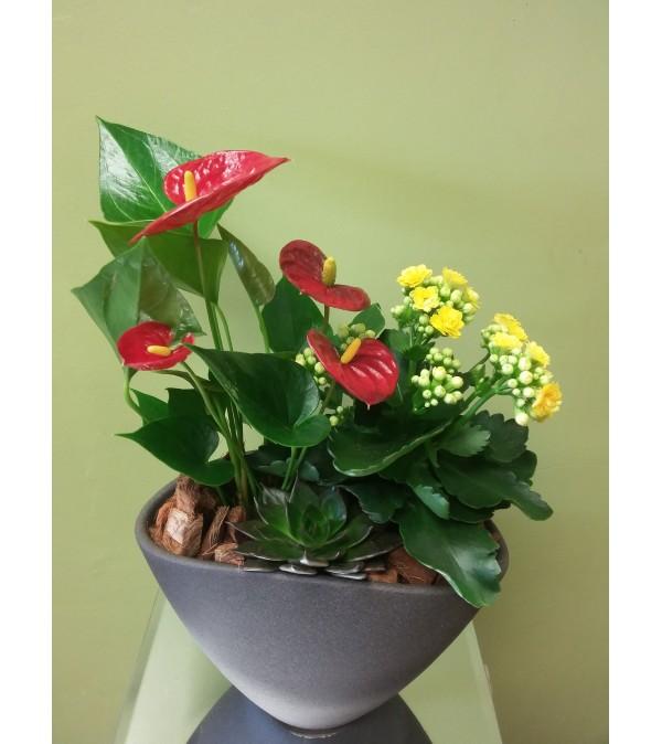 Small Anthurium Planter