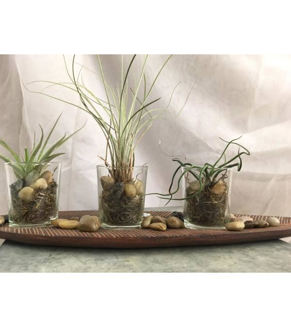 Tillandsia Tray