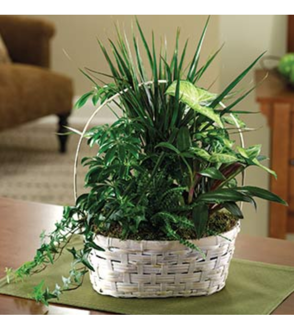 Peaceful Green Plant Basket