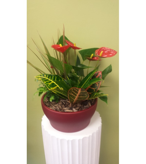 Large Anthurium Planter