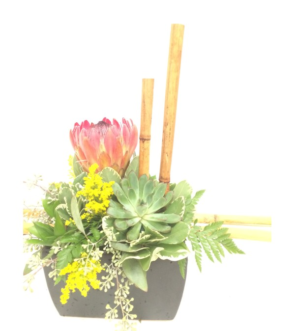 Protea Design