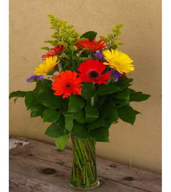 Rainbow of Gerberas