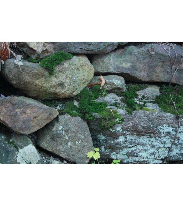 Mossy Rocks Lover