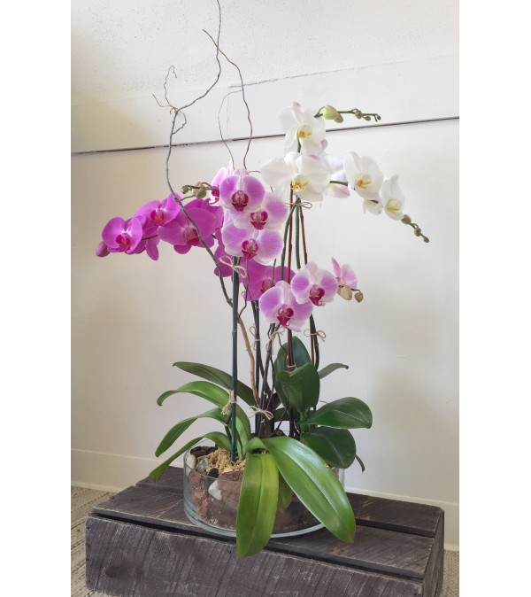 Triple Orchid Planter