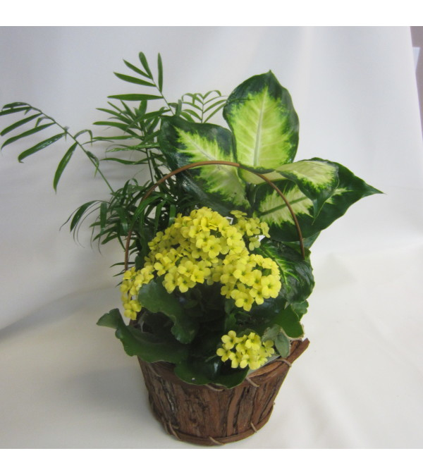 Tropical Planter Basket