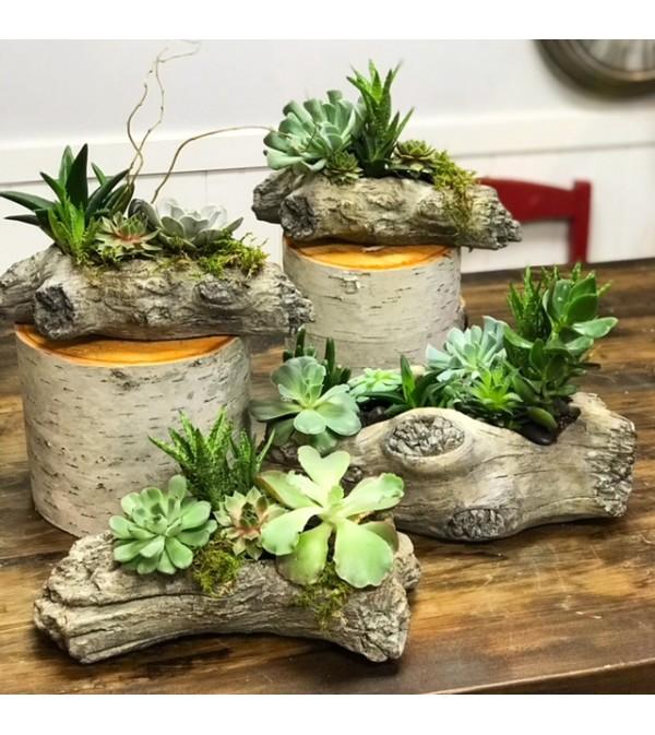 Sweet Succulents