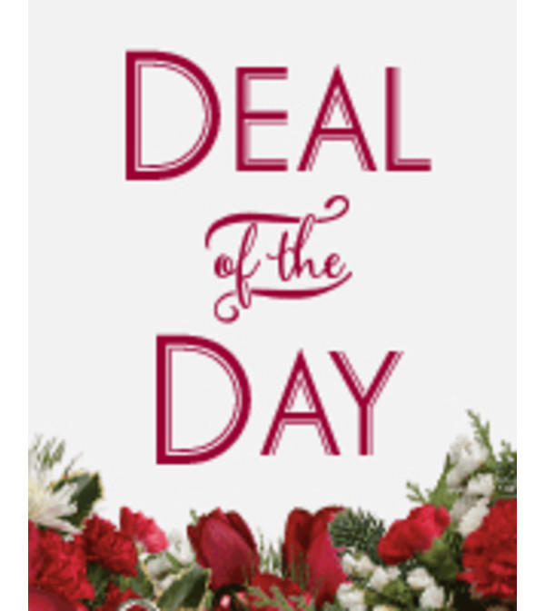 Deal of the DAY Christmas