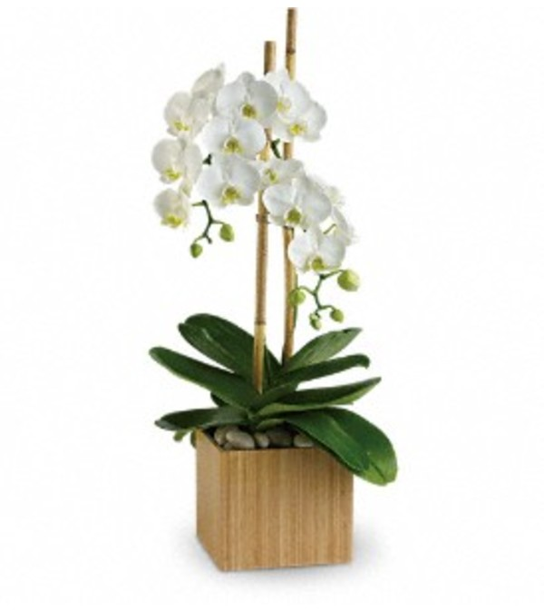 Opulent Orchids - by Jennifer's Flowers & Gifts