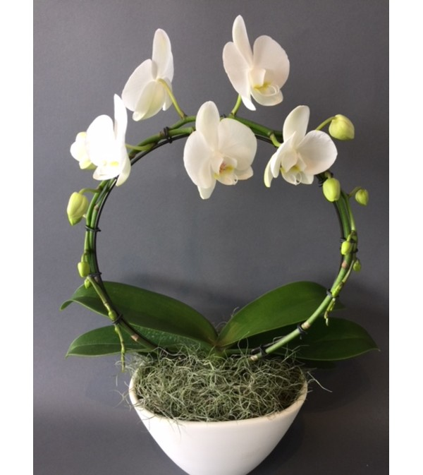 Orchid Hoop Planter - Oakville, ON Florist on garden yard spinners, garden walls, garden shrubs, garden steps, garden vegetable garden, garden trellis, garden arbors, garden seeders, garden plants, garden pots, garden beds, garden pools, garden patios, garden bench, garden boxes, garden tools, garden art, garden ideas, garden urns, garden accessories,