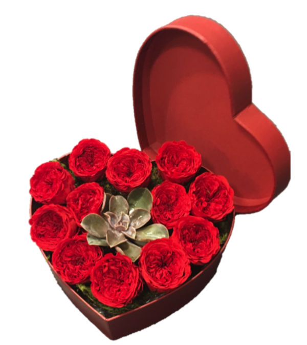 12 Preserved Red Rose Heart Box with Succulent