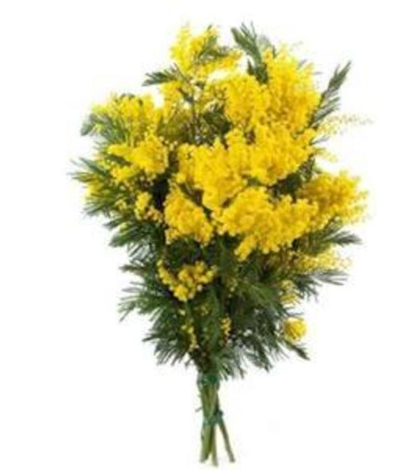 Mimosa Bouquet for International Women's Day