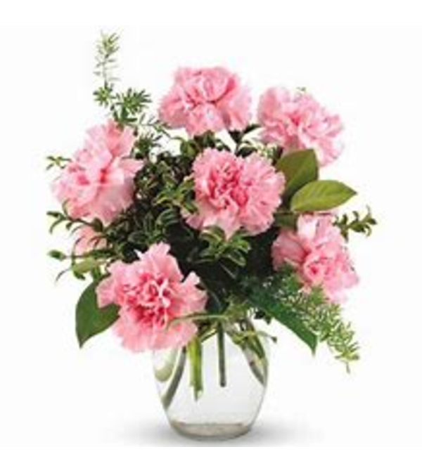 6 Carnations in a Vase