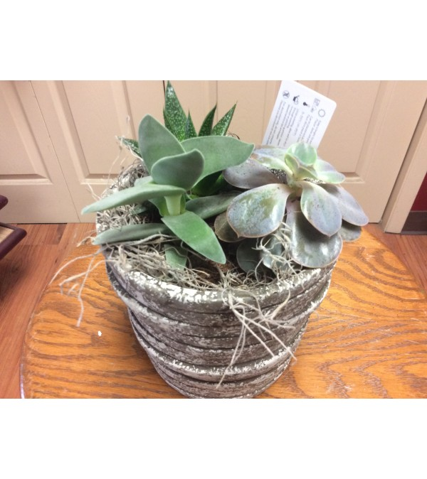 Succulent grey  bowl