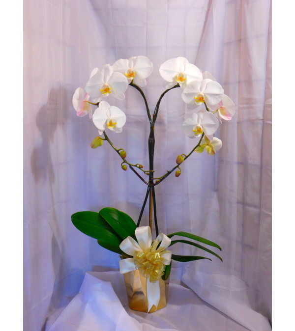 I Love You Mama White Orchid