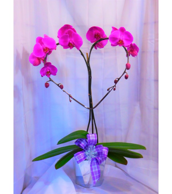 I Love You Mama Purple Orchid