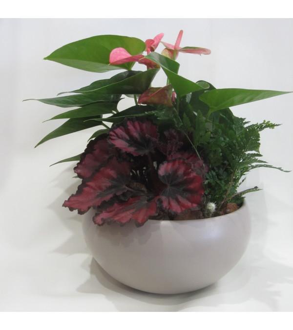 Tropical Delight Planter