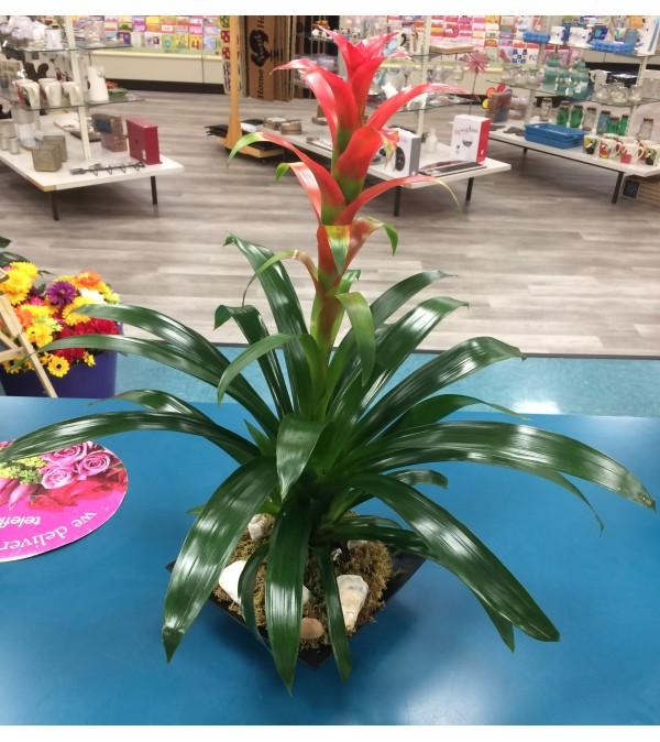 Vibrant Blooming Bromeliad