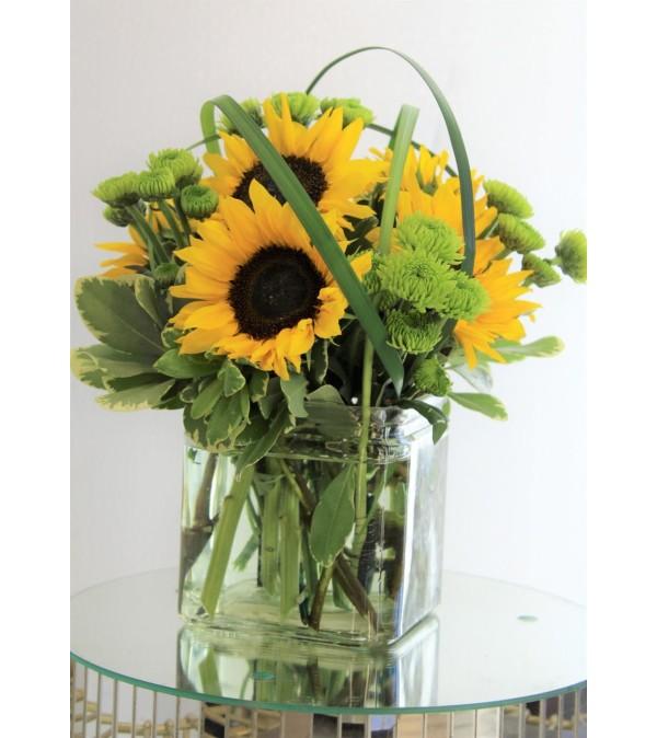 Sunflower Splendor