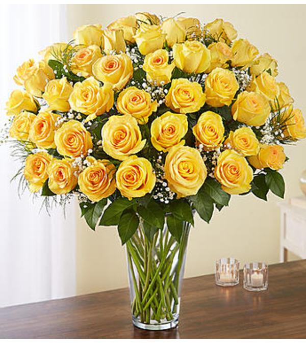 Yellow Roses Four Dozen Charlotte Nc Florist