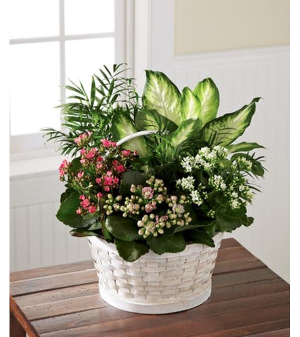 Rural Beauty Basket Dishgarden